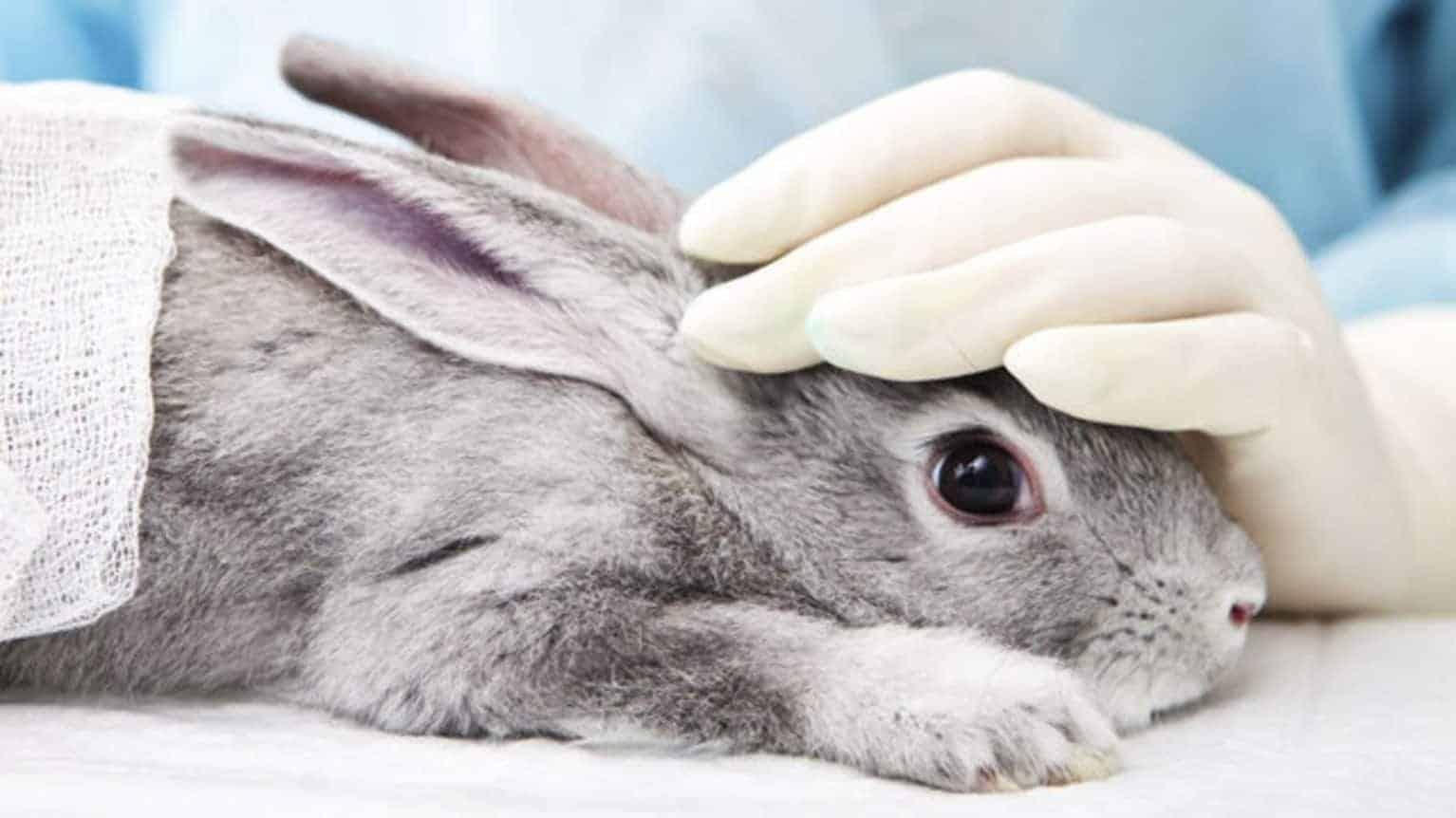 interdiction test animaux