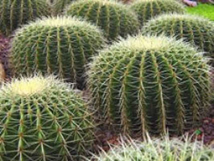 Les dérivés du cactus : découvrez tous les secrets de cette plante miracle !
