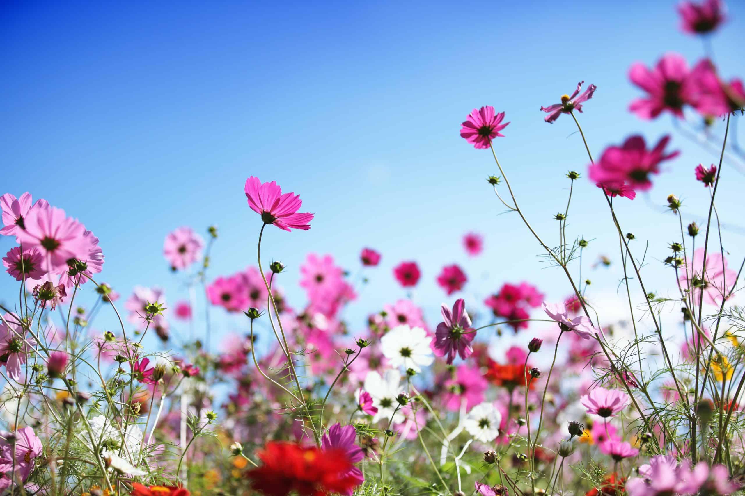 Fleurs pour shampoing